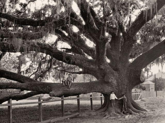 oak-tree-wisherd_61731_990x742