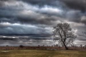 Puine* *arvatavasti enim pildistatud puu Pärnus, mul oli see veel tegemata